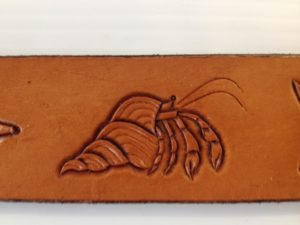leather hermit crab